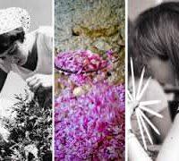 Exposition parfum en Pays de Grasse