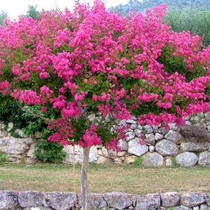 le jardin aux arbres remarquables